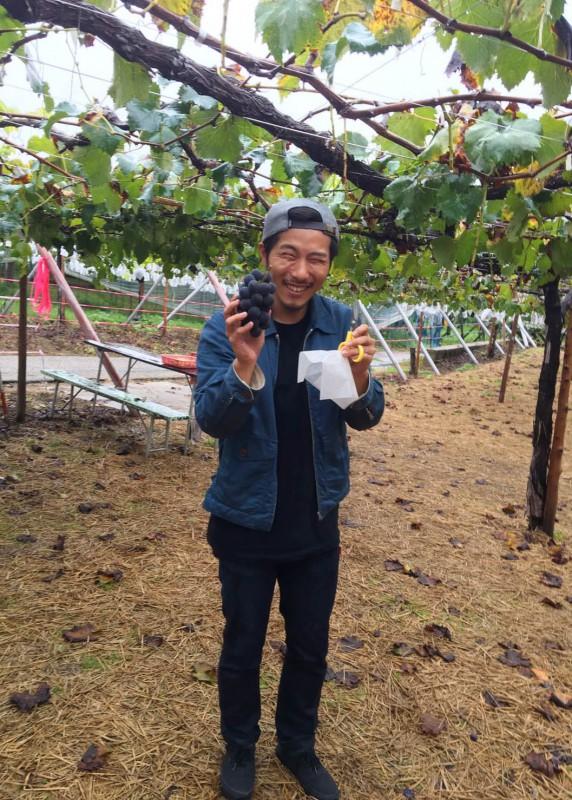 grape_picking_3